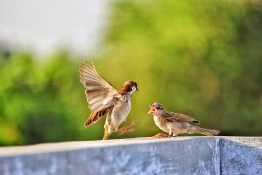 Selective Focus of Two Birds on Concrete Beam