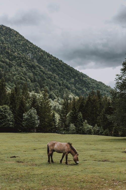Kostenloses Stock Foto zu außerorts, baum, berg, draußen