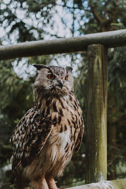 Gratis stockfoto met adelaar, arend, beest, boom