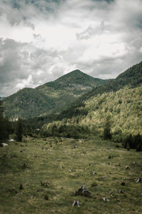 Kostenloses Stock Foto zu acker, baum, berg, draußen