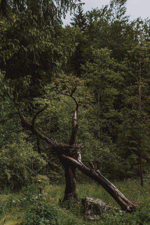 Gratis stockfoto met blad, boom, buiten, buitenshuis