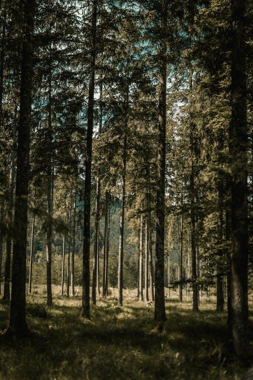 Gratis stockfoto met begeleiding, blad, boom, buiten