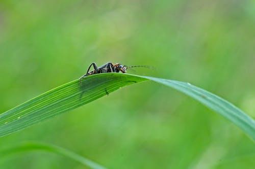 Photos gratuites de insecte