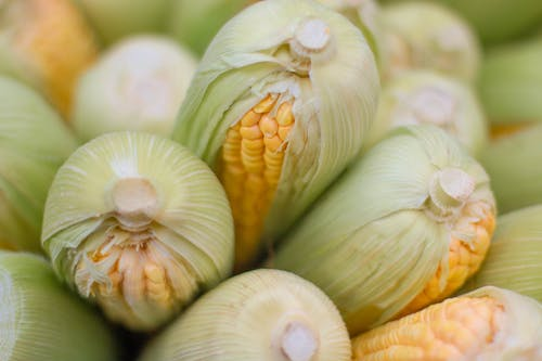 White and Yellow Garlic in Close Up Photography