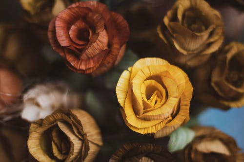 Free stock photo of flower, rose, wood flower, wood rose