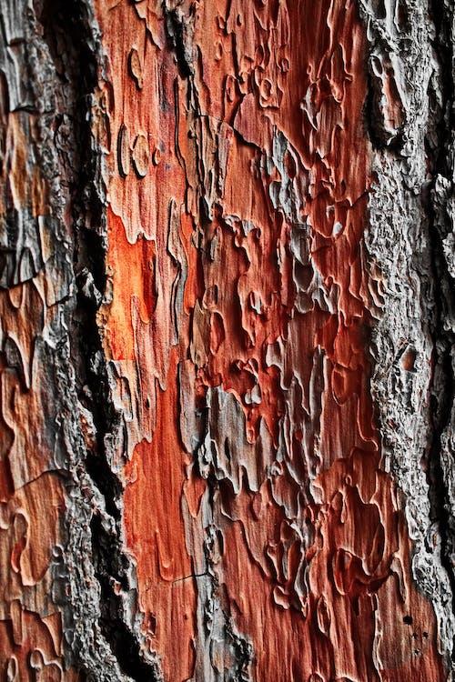 Immagine gratuita di abbaiare, albero, ambiente, biologia