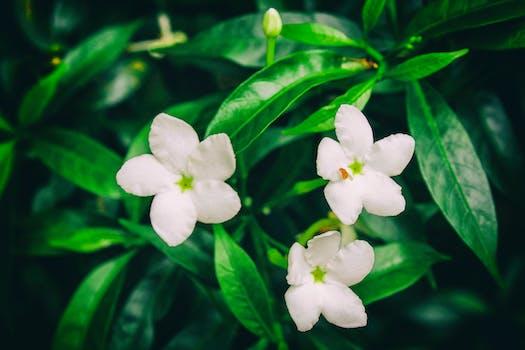 Free Stock Photo Of Beautiful Flowers Close Up Flora Flower HD Desktop Wallpaper