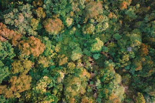 Fotobanka sbezplatnými fotkami na tému abstraktný, farba, flóra, fotka