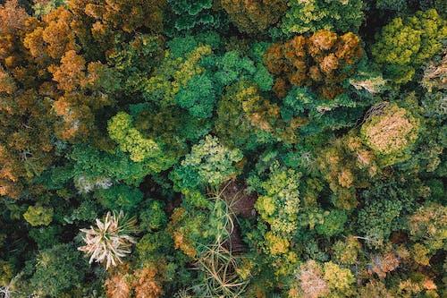 Fotobanka sbezplatnými fotkami na tému bezstavovce, biológia, farba, flóra