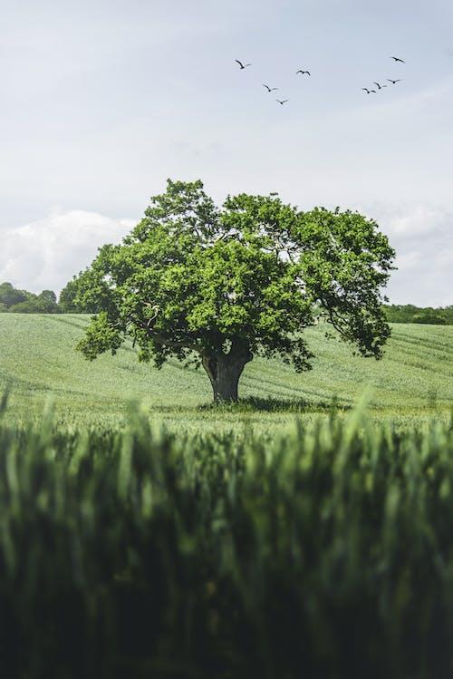 绿草地上的绿树