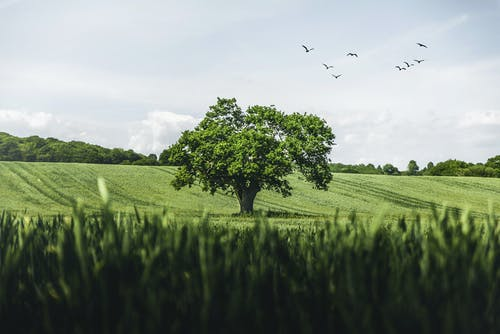 Green Grass Field With Birds Flying