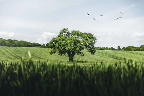 绿草田与鸟儿飞翔