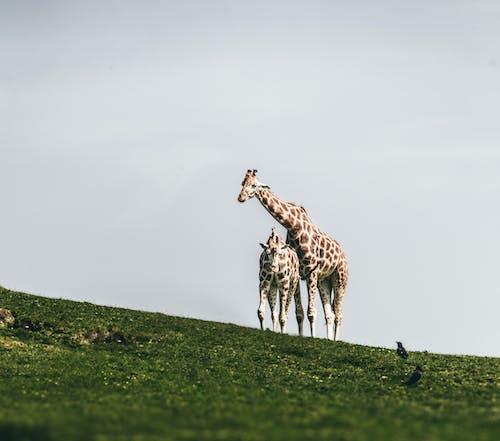 動物, 哺乳動物, 戶外 的 免费素材图片