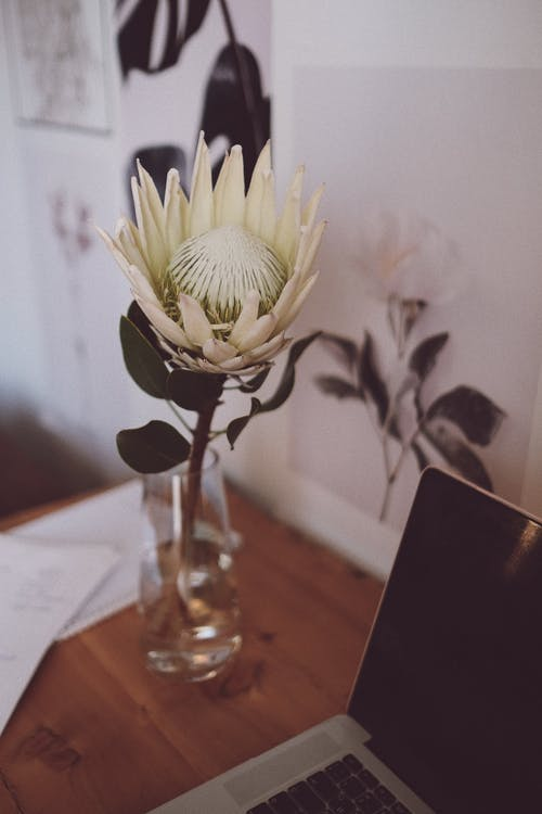From above of light Protea cynaroides flower in transparent vase on wooden table near switched off laptop