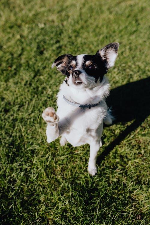 Cute dog in collar on green lawn