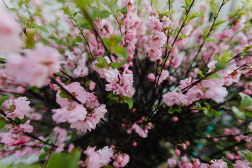 Branches of tree with tender pink flowers growing in garden on sunny summer day