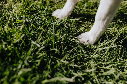 Paws of small dog on green grass