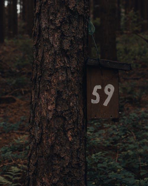 Immagine gratuita di albero, ambiente, armonia, bosco