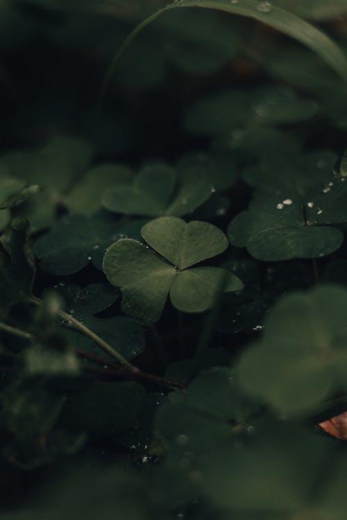 Immagine gratuita di ambiente, armonia, bagnato, botanica