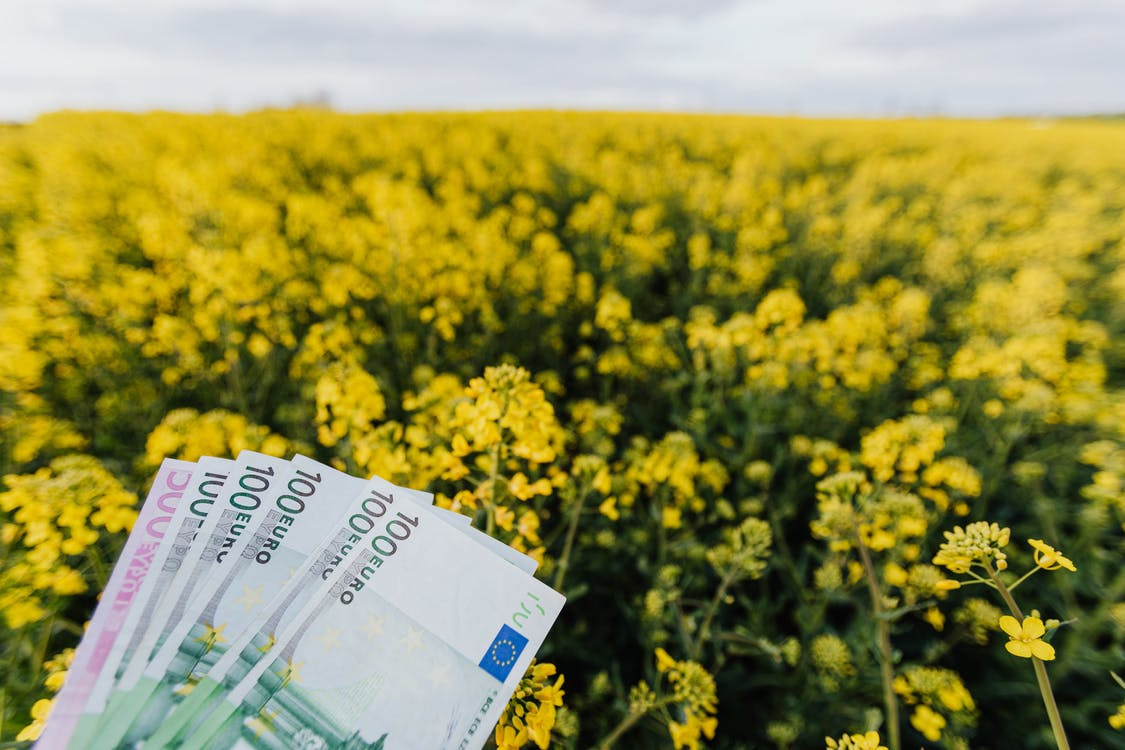 Various Russian paper banknotes located on picturesque view of bright blossom field on cloudy day