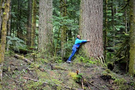 Free stock photo of nature, tree trunk, outdoors, hug