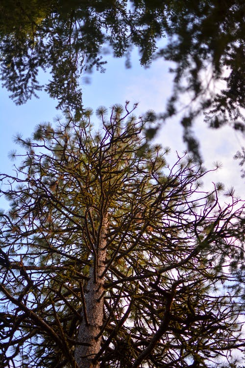 Free stock photo of nature, nature park, pine, tree trunk
