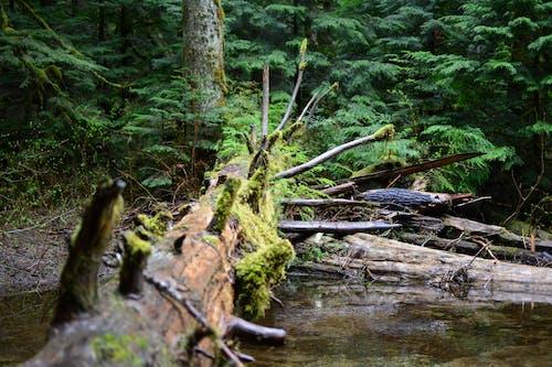 Free stock photo of fallen tree, moss, nature, woods