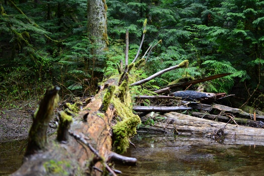 Free stock photo of nature, fallen tree, moss, outdoors