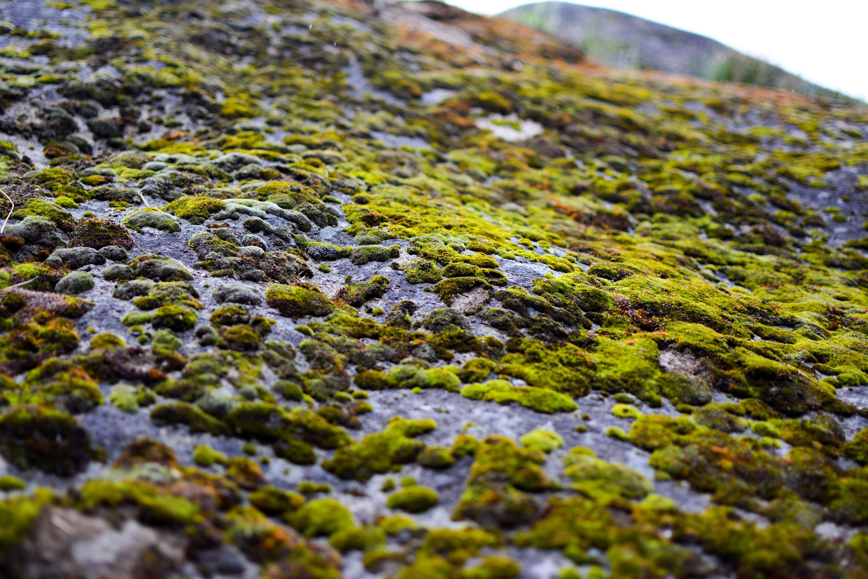 Free stock photo of boulder, moss, Mossy rocks, nature