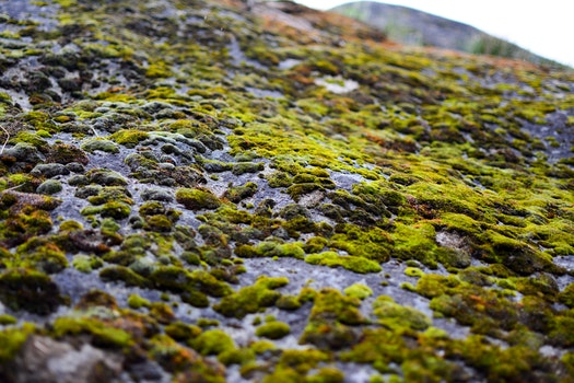 Free stock photo of nature, moss, stone, boulder