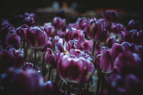 Бесплатное стоковое фото с букет цветов, глубина резкости, красивый, лампа