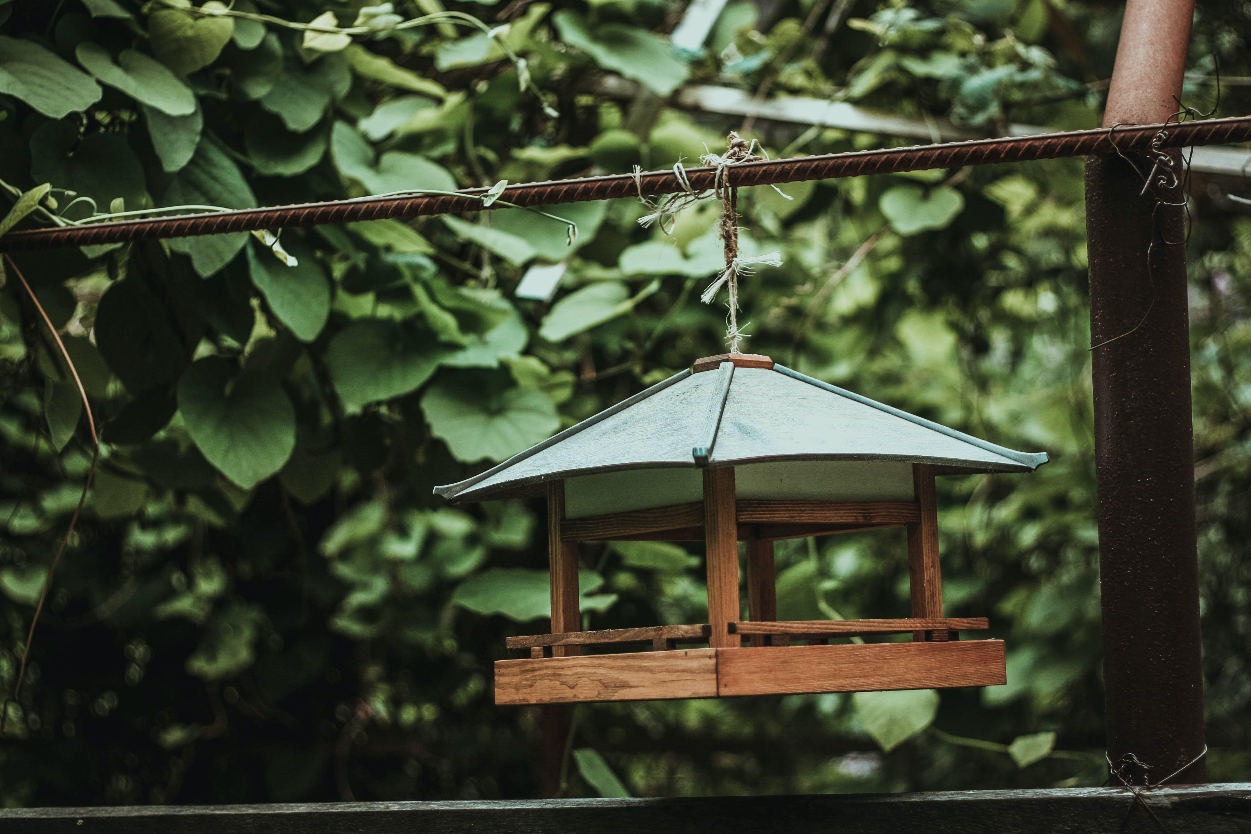 Free stock photo of bird house, green, nature