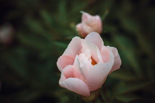 Gratis lagerfoto af blomst, grøn, natur