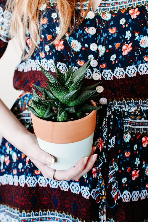 Woman Holding Green Cactus Plant