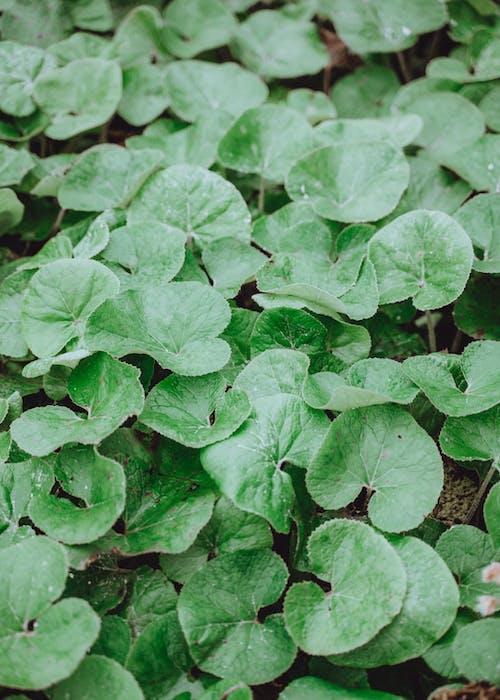 Imagine de stoc gratuită din agricultură, creștere, culoare