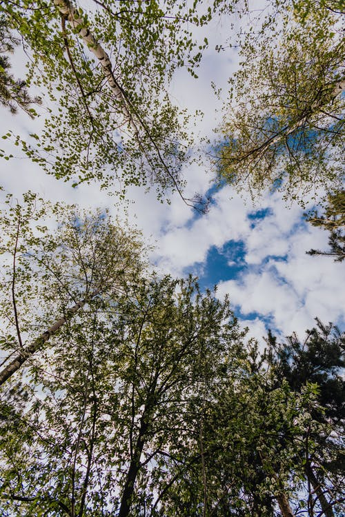 Low angle of different trees in mixed forest on bright spring day with white clouds in blue sky