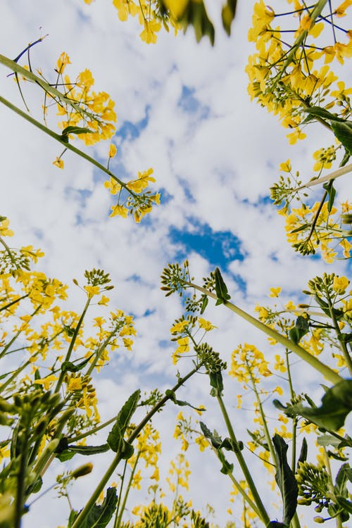 Yellow wildflowers against cloudy sky