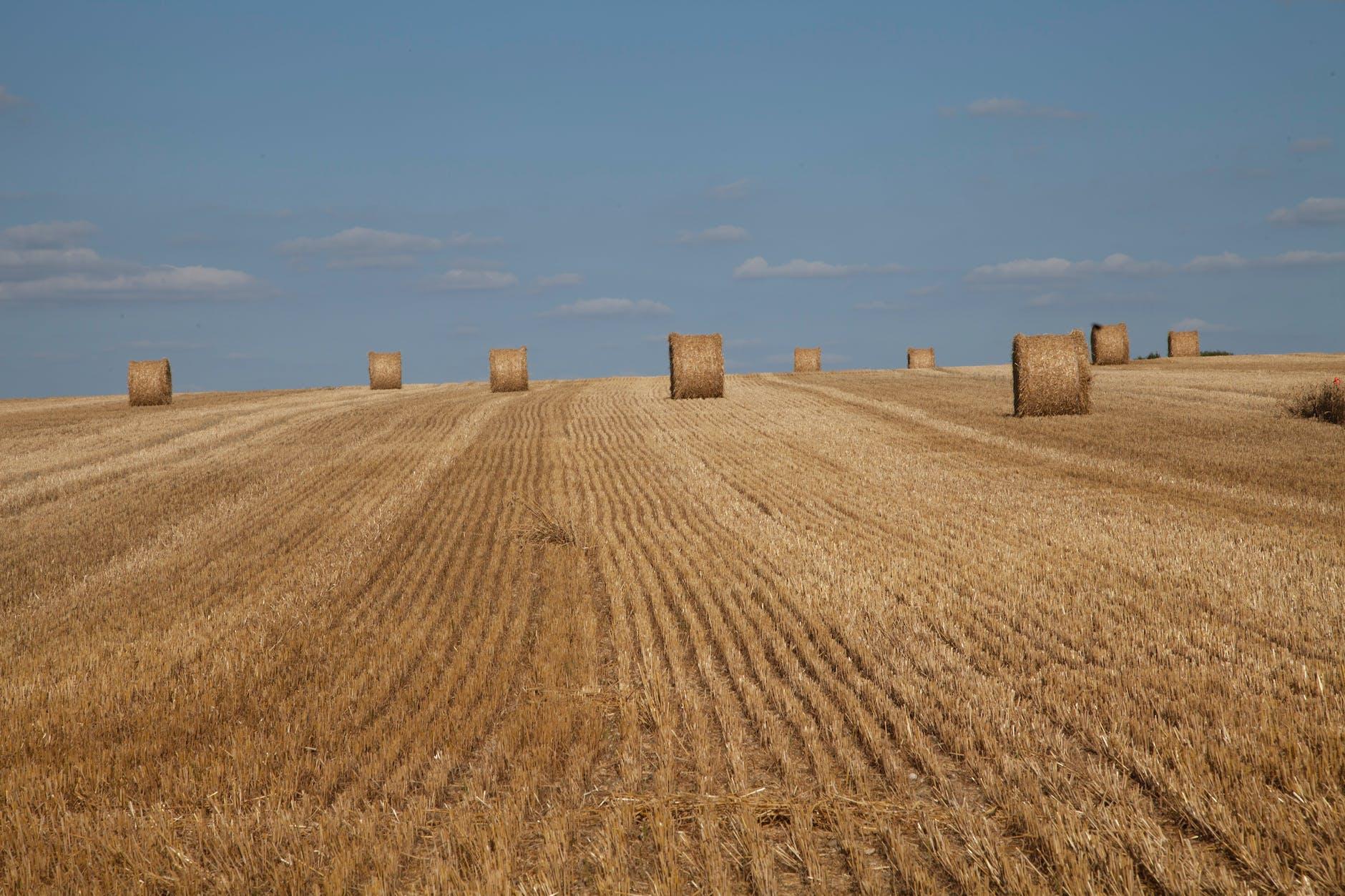 фото камни на сельскохозяйственных полях эстонии очень странным то