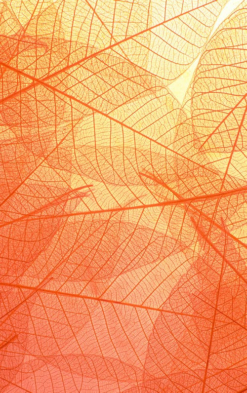 Abstract texture of colorful bright pattern of transparent leaves of orange and yellow color