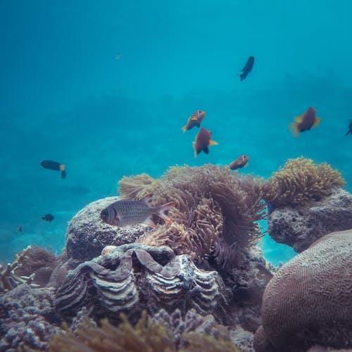 Δωρεάν στοκ φωτογραφιών με aqua, άγρια φύση, άγριος, βάθος