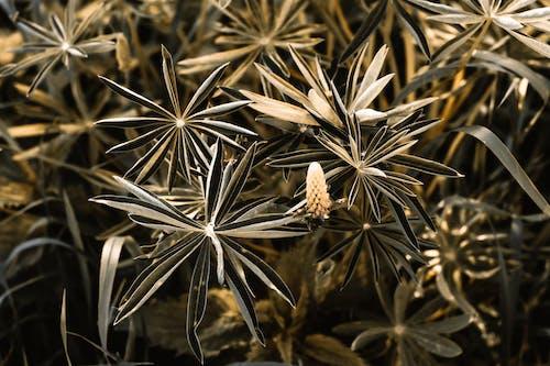 乾的, 八角, 八角大茴香, 八角茴香 的 免費圖庫相片