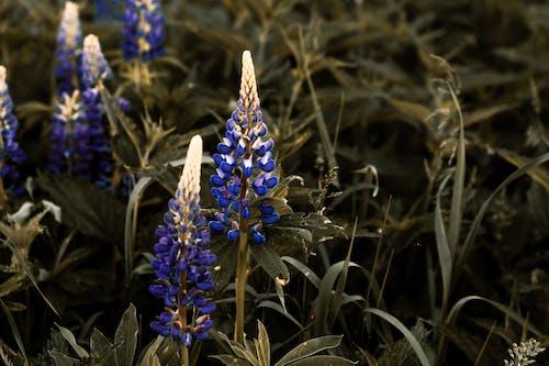 上色, 乾草地, 乾草田, 夏天 的 免費圖庫相片