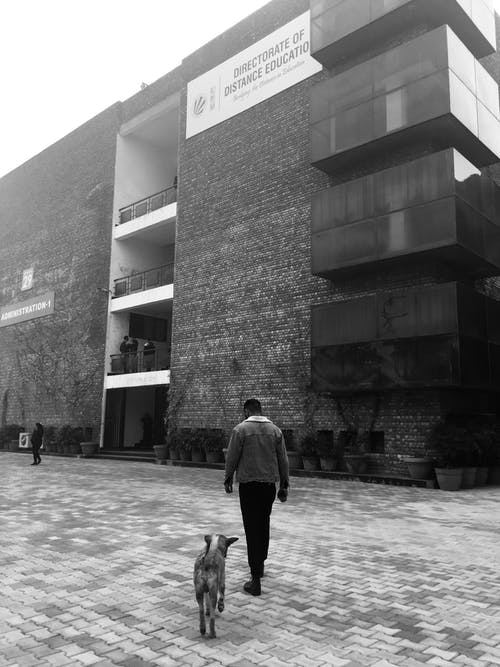 Back view of anonymous male in casual clothes strolling on pavement with dog near brick building in daytime in street