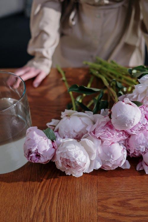 Immagine gratuita di arredamento, arredamento interno, bel fiore, bocciolo