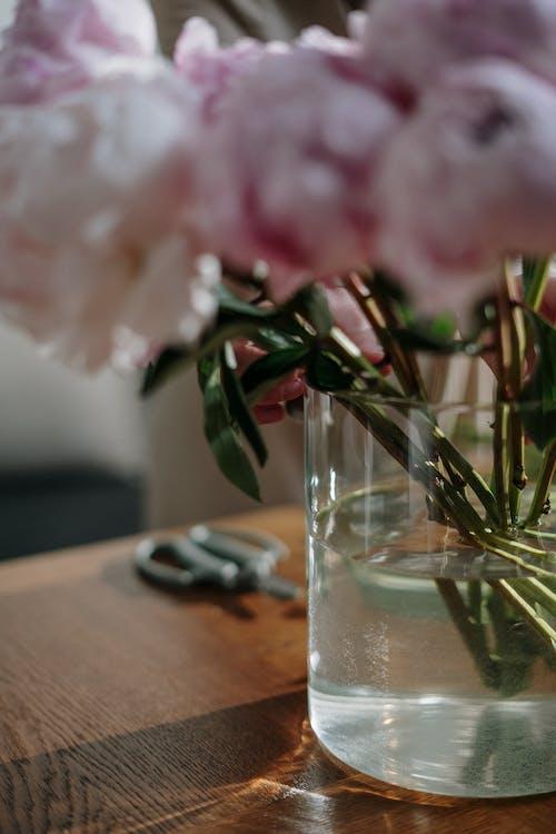 Immagine gratuita di arredamento, arredamento interno, bel fiore