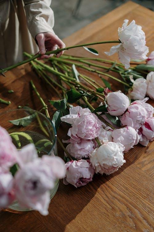 arctalan, egy ember, fehér rózsák