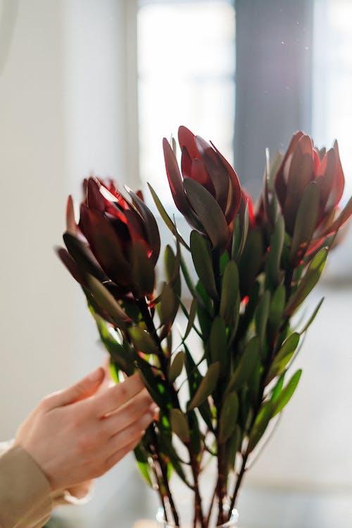 Immagine gratuita di bel fiore, bouquet, erba, fiori