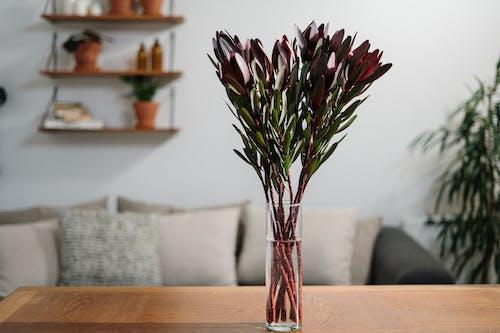 Foto d'estoc gratuïta de brot, flor bonica, flora