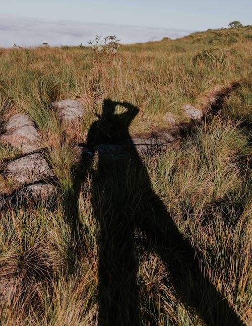 Black Dog on Green Grass Field