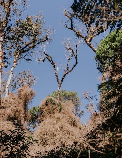 Green Trees Under Blue Sky